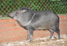 Liberadas especies animales rehabilitadas en el Huila