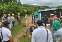 Apoyo gubernamental al sector cacaotero