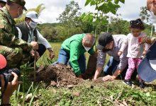 Ambiciosas metas de forestación en el Huila