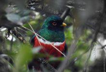 Se viene el tercer Festival de Aves en el Huila